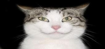 Chats qui ont le sourire