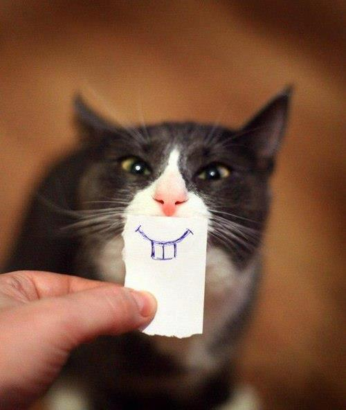 chat-sourire-3