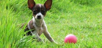 Qu'est-ce qu'il faut savoir avant d'adopter un chien ?