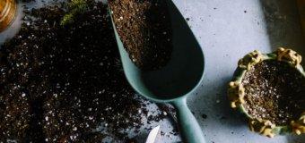 La binette, un outil de jardinage indispensable