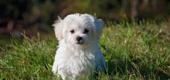 Santé canine : les précautions à prendre pendant le grand froid